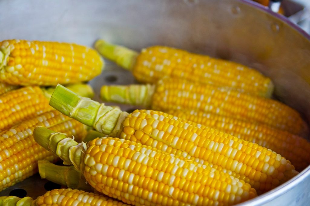 bioplastique végétal maïs